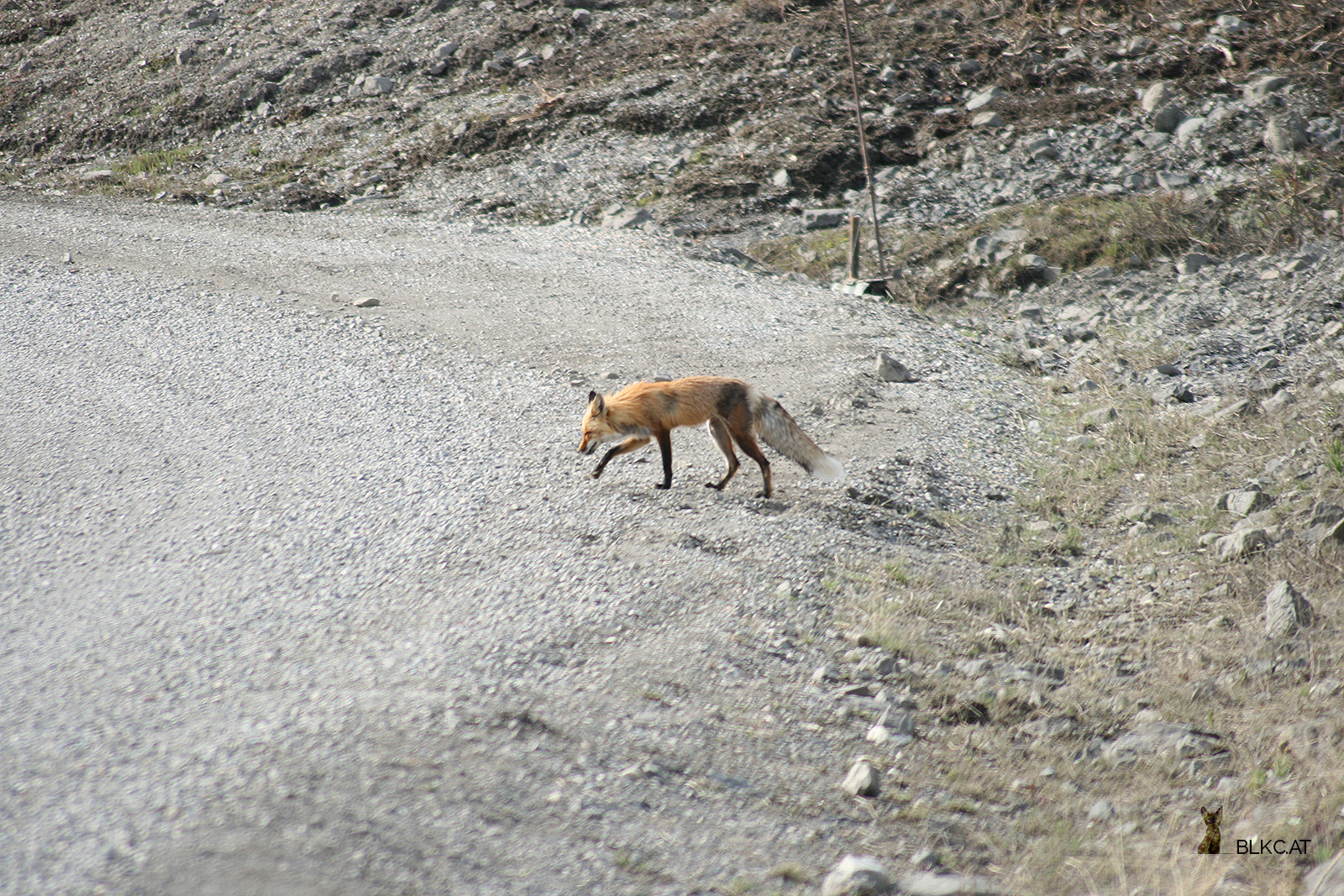 Denali-Nationalpark-5