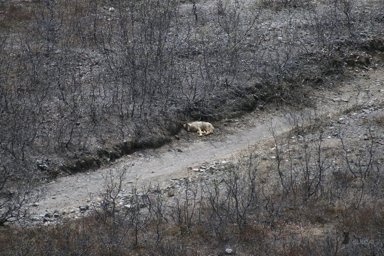 Denali-Nationalpark-8