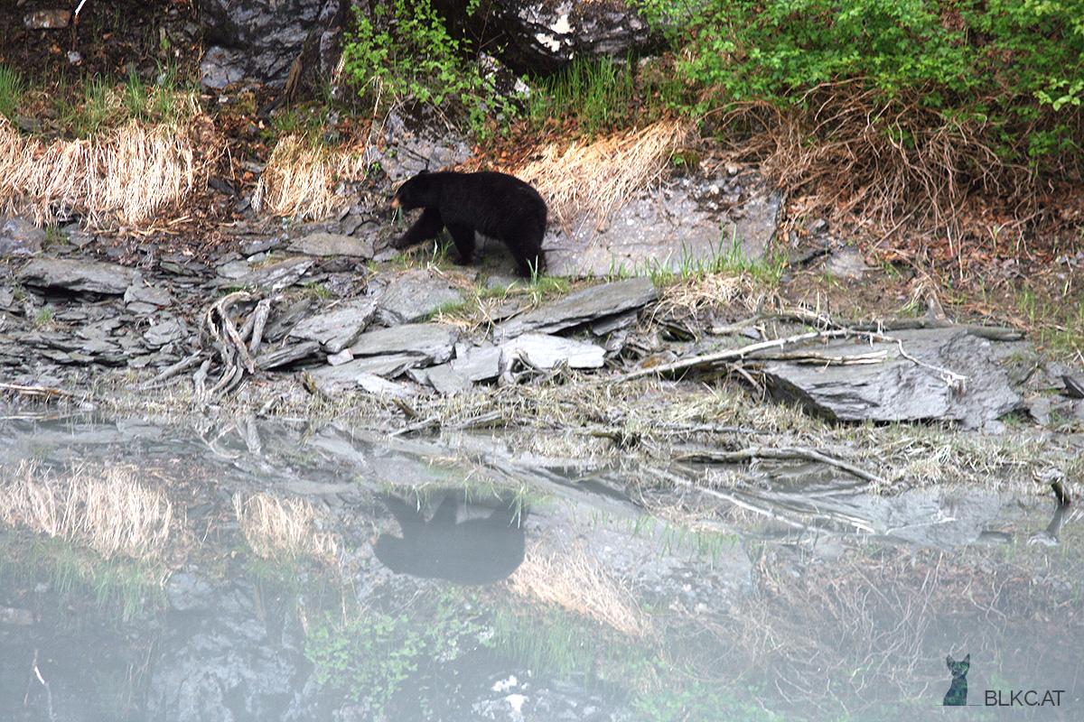 Valdez-Alaska-blackbear