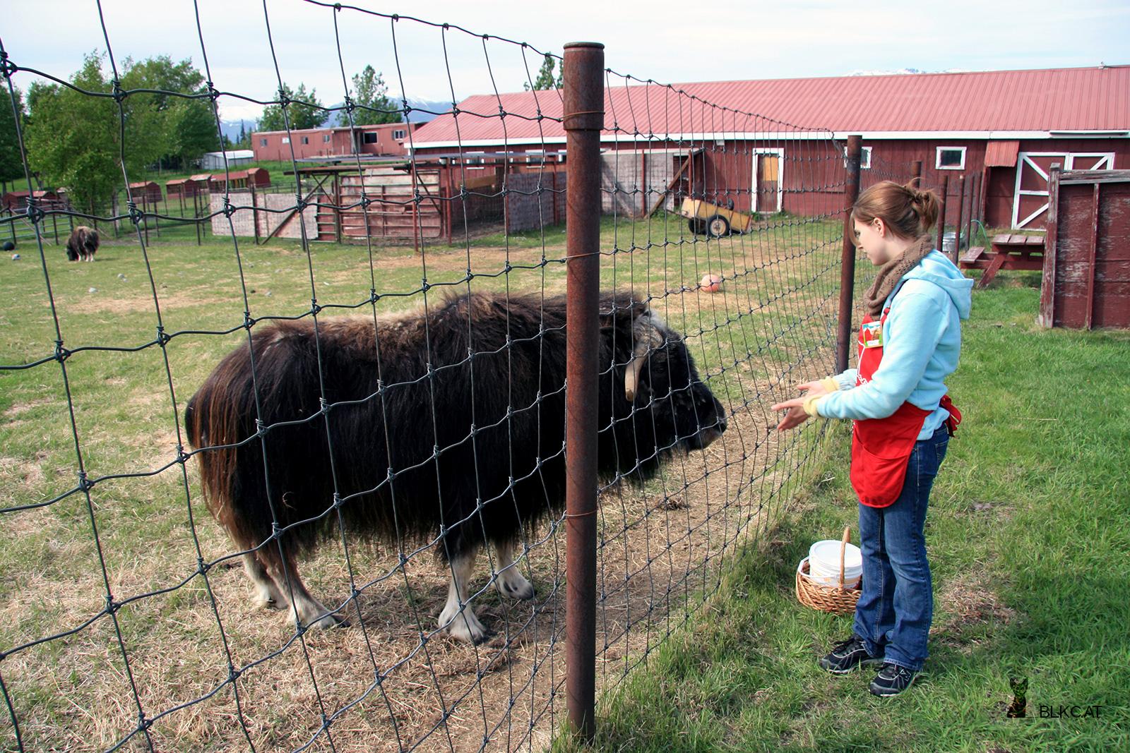 Alaska-Petting-Zoo-12