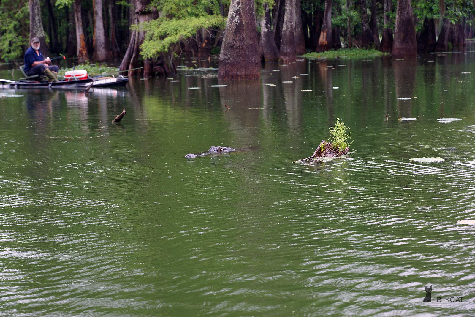 Swamp-Tour
