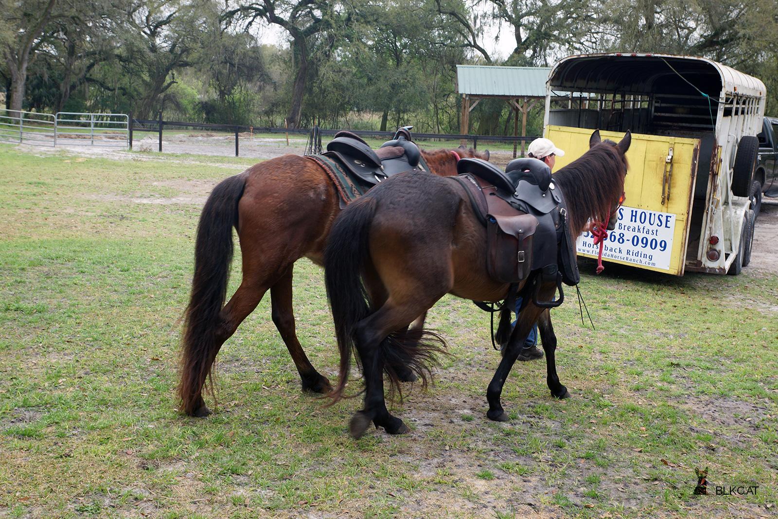 Florida-Horse-Ranch